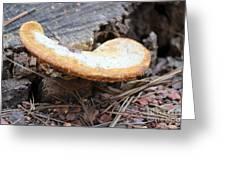 Golden Edged Mushroom Greeting Card