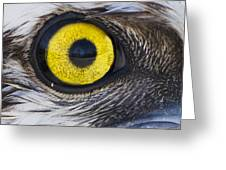 Golden Eye Greeting Card