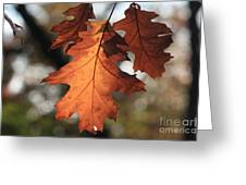 Golden Fall Leave's Close Up Greeting Card