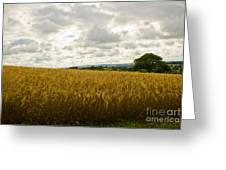 Golden Field Greeting Card