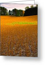 Golden Field Greeting Card by Luba Citrin