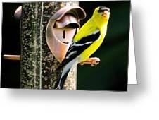 Golden Finch Greeting Card