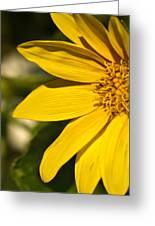 Golden Flower 1 Greeting Card