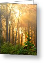 Golden Fog Thru The Trees Greeting Card
