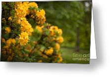 Golden Glow Greeting Card