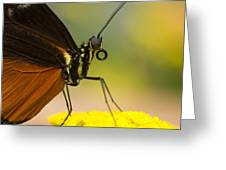 Golden Helicon On Flower Greeting Card