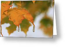 Golden Leaves Silvery Drops Greeting Card