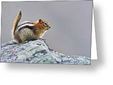 Golden-mantled Ground-squirrel Greeting Card