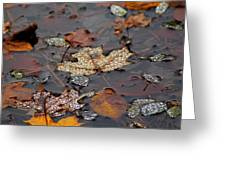 Golden Maple Dew Drops Greeting Card
