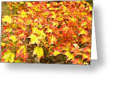 Golden Maple Leaves Greeting Card