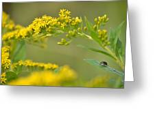 Golden Perch Greeting Card