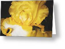 Golden Petals 2 Greeting Card
