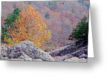 Golden Poplar Among The Rocks At Johnsons Shut Ins State Park Greeting Card