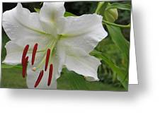 Golden Rayed  Lily Greeting Card
