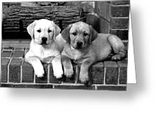Golden Retriever Pups Greeting Card