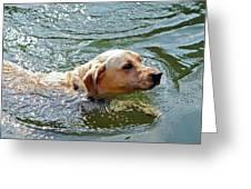 Golden Retriever Swimming Close Greeting Card