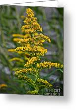 Golden Rod Greeting Card