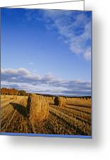 Golden Rolls Of Hay In A Field Greeting Card