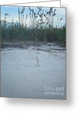 Golden Slipper Egret Sea Oats Greeting Card