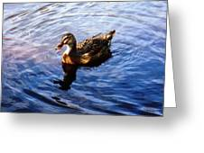 Golden Star Duck Greeting Card by Joan Meyland