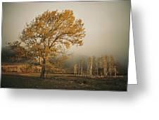 Golden Sunlit Tree With Mist, Yakima Greeting Card