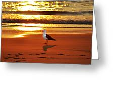 Golden Sunrise Seagull Greeting Card