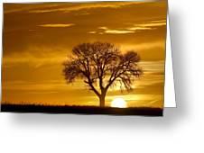 Golden Sunrise Silhouette Greeting Card
