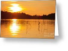 Golden Sunsset Greeting Card