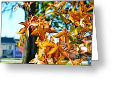 Golden Sweetgum Leaves Greeting Card