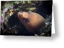 Golden Tail Eel Greeting Card
