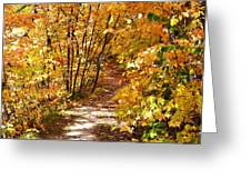 Golden Trail Greeting Card