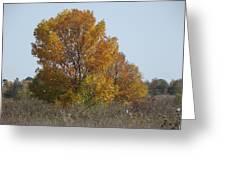 Golden Tree II Greeting Card