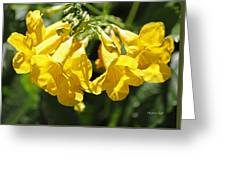 Golden Trumpets Greeting Card