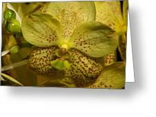 Golden Vanna Greeting Card