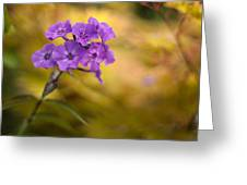 Golden Violets Greeting Card