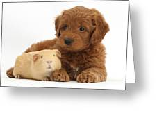 Goldendoodle Puppy And Guinea Pig Greeting Card