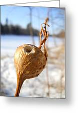Goldenrod Gall Hole Greeting Card