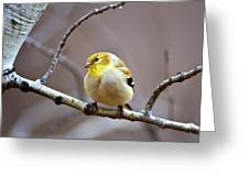 Goldfinch In March Greeting Card