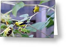 Goldfinch Pair Greeting Card