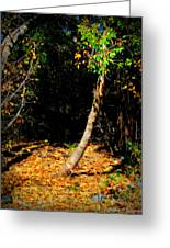 Golds Into The Natural Tunnel Greeting Card