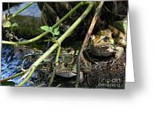 Gone To The Frogs Greeting Card