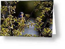 Good Morning Sunshine - Eastern Bluebird Greeting Card