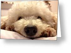 Good Night From Mel Cute Dogs Dog Greeting Card For Sale By