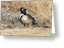 Goose Exercises  Greeting Card
