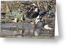 Goose Fight Greeting Card