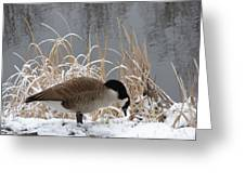 Goose In Snow Greeting Card