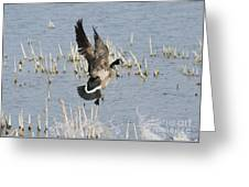 Goose Landing Greeting Card