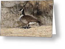 Goose Profile Greeting Card