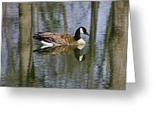 Goose Reflections Greeting Card