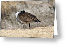 Goose Rubbing Its Back Greeting Card